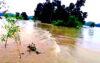 টাঙ্গাইলে পানি উন্নয়ন বোর্ডের গাফিলতিতে বাঁধ ভেঙ্গে লক্ষাধিক মানুষ পানি বন্দি