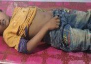 টাঙ্গাইলের সখিপুরে বিষধর সাপের কামড়ে শিশুর মৃত্যু