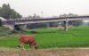 টাঙ্গাইলে খরস্রোতা ধলেশ্বরী নদীর বুকে এখন সবুজের সমারোহ